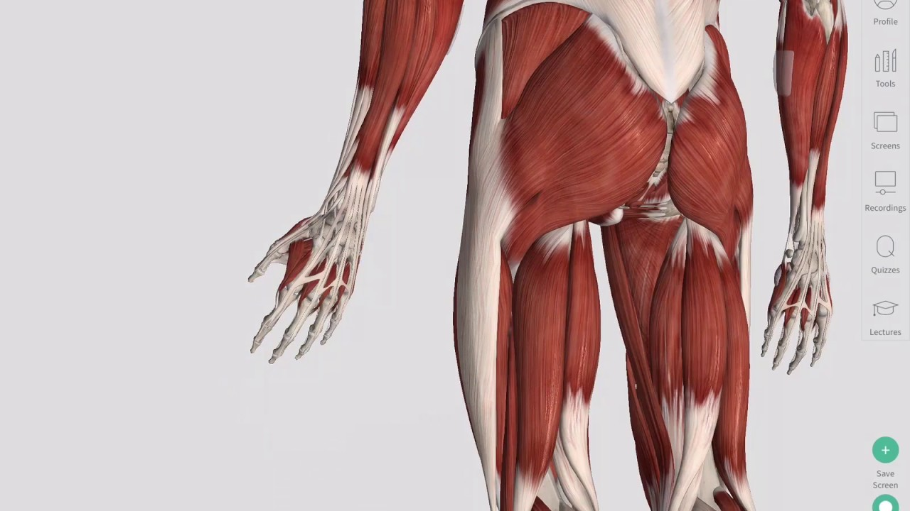 Skeletal Muscles Complete Anatomy Youtube