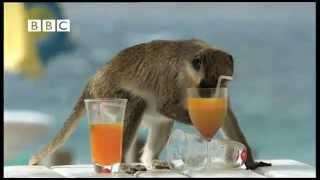 Пьяные Обезьяны