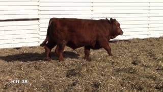 Crosshair Simmental 44D Lot 38
