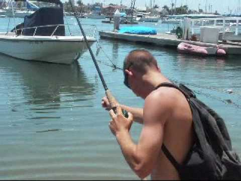 Team Basstic - Fishing for Spotted Bay Bass in Newport Harbor