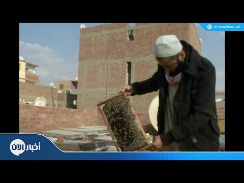مصري يستخدم سم النحل في أغراض علاجية  - نشر قبل 46 دقيقة
