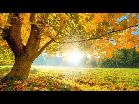 Relaxing Zen Music, Positive Energy Music, Relaxing Music, Slow Music, ☯3369