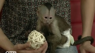 Знакомство с питомцами: обезьянка-капуцин (03.12.15)