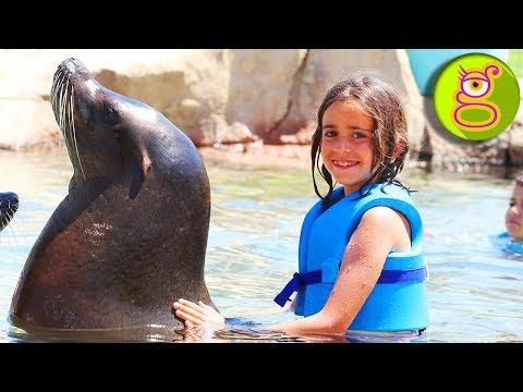 Nadando con LEONES MARINOS en el AQUA PARK