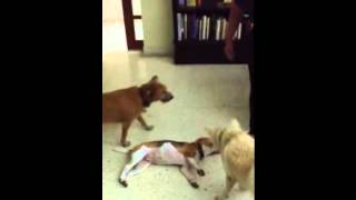 Dog Training In Malaysia By Dave Collymore
