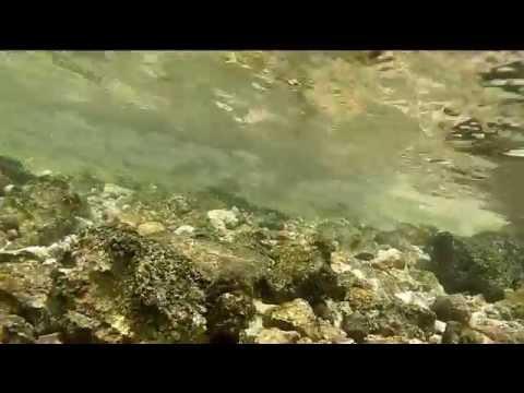 GoPro: Snorkeling in Qatar