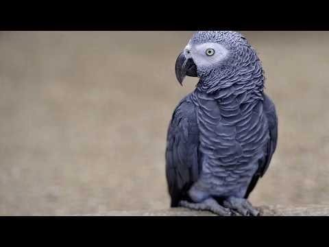 скачать голоса птиц mp3 для манка