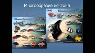 жизнь в океане презентация 7 класс