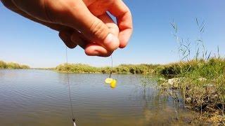 Насаживание кукурузы на крючок.Рыбалка.Fishing(В этом видео говорится как одеть кукурузу на крючок разными способами. Отличная насадка для ловли сазана,..., 2014-10-06T19:42:02.000Z)