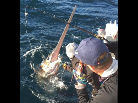 IFISH - Is This The 1000lb SWORDFISH?? (Catch & Release!)