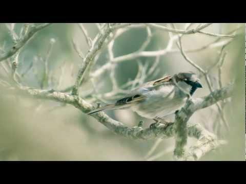 A. Vivaldi - Piccolo Concerto for strings & continuo in C major, RV 443 (Live)