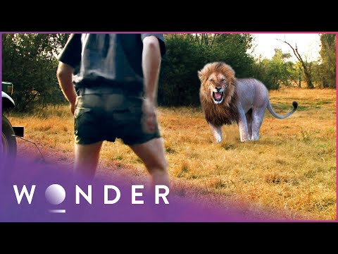 Hunter Seriously Injured After Deadly Lion Attack | Human Prey S1 EP6 | Wonder