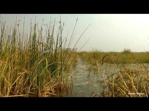 Baraila Tal (Lake), a massive wetland in Vaishali District of Bihar.