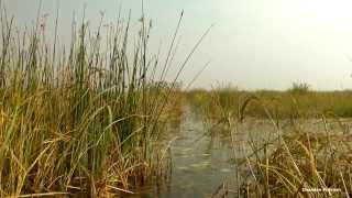 Baraila Tal (Lake), a massive wetland in Vaishali District of Bihar.