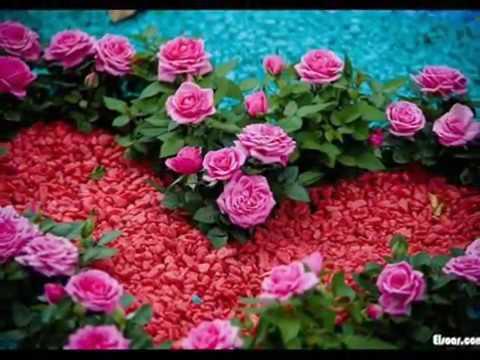 Живые обои розы на рабочий стол