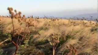 Roan Mountain sunrise