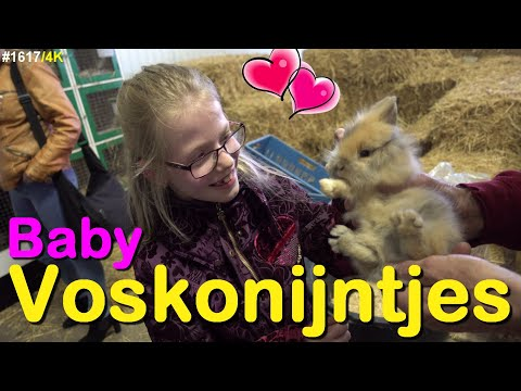 Baby vosKONIJNTJES bekijken bij een konijn fokker #1617