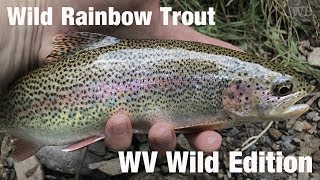 WB - Fly Fishing Wild Rainbow Trout, West Virginia Wild Edition - July '18