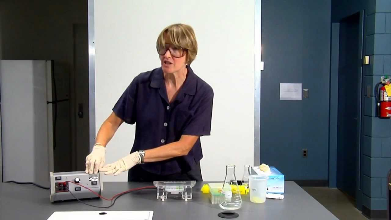 dna gel electrophoresis lab demo