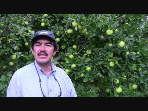 Manzanas en Chihuahua
