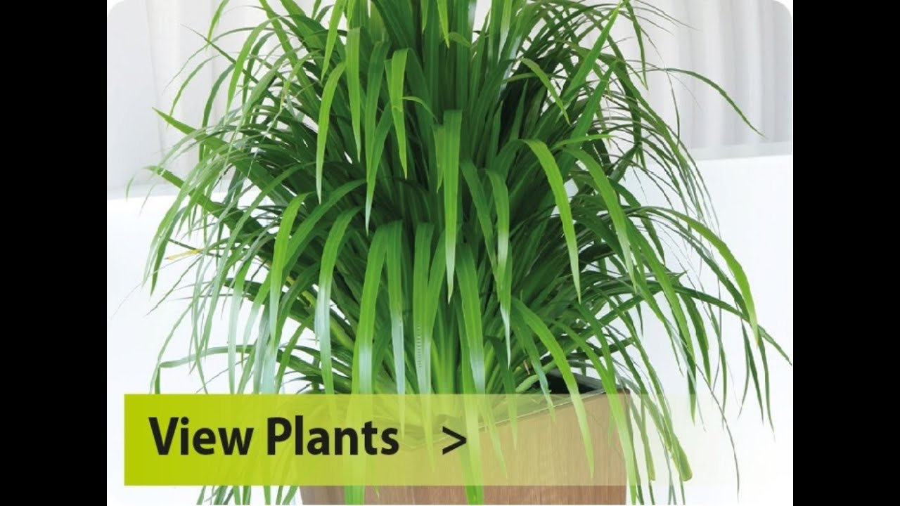 indoor plants for indoor plants for sale youtube