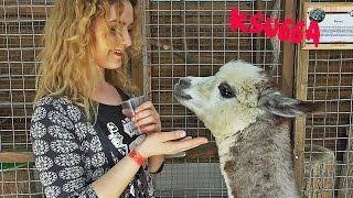 Самарский контактный зоопарк(Всем большой привет! В этом видео я делюсь с вами минутками моей жизни ) Всем приятного просмотра и всего..., 2016-04-17T15:40:49.000Z)