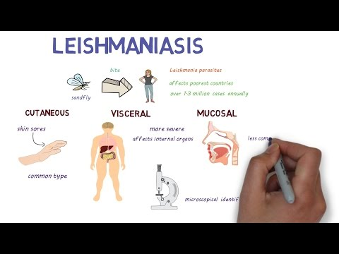 What is Leishmaniasis? An introduction and overview