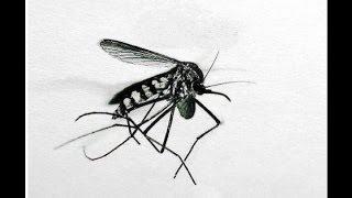 """""""Le moustique"""" leçon 58, livre III - Le Tour du Violoncelle en 80 leçons"""