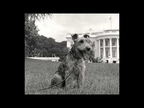 The Kennedy's Dog Lost Recording Session Complete