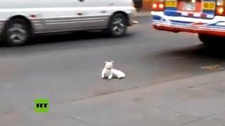 ¿Un gato con tendencias suicidas o en busca de refugio?