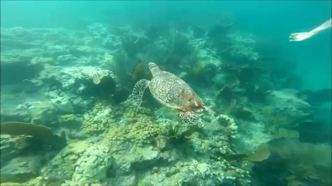 Snorkeling Looe Key Reef