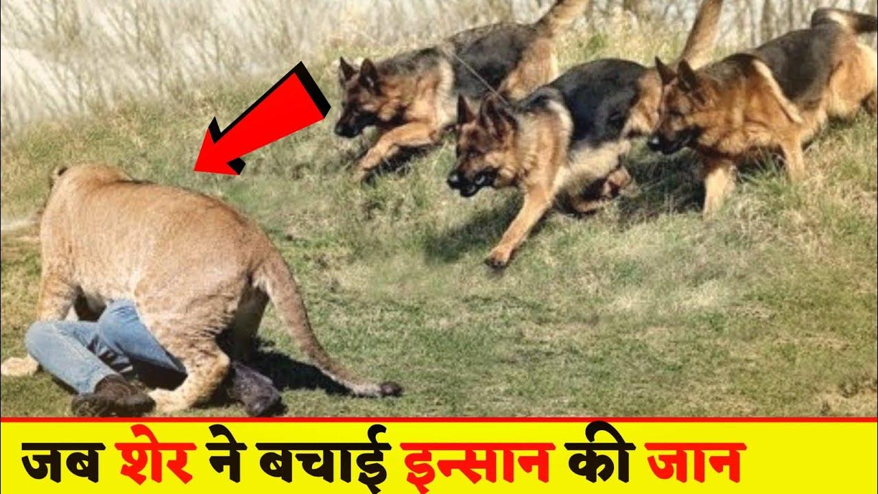 देखिये इन खतरनाक कुत्तों को जो किसी इंसान की जान आसानी से ले सकते है । Weired Dogs