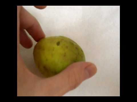 How To Eat Mini Guavas And Review Of This Fruit