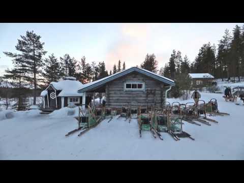 Voice of Nature - Schlittenhundetouren in Schweden