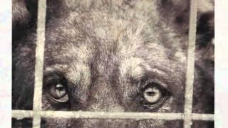 Глаза собаки.wmv