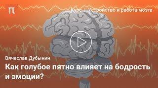 Центры сна и бодрствования — Вячеслав Дубынин
