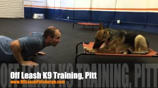Working Out! | German Shepherd 7 Months Old | Dog Training Pittsburgh