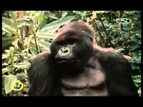 In loving memory of Dian Fossey