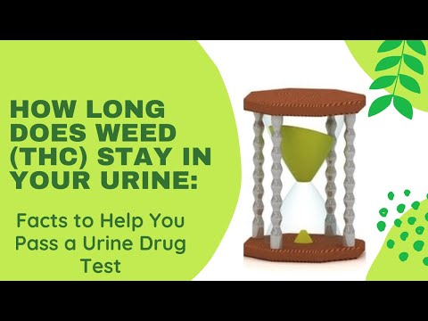 How Long Does Weed (THC) Stay In Your Urine?'– Facts To Help You Pass A Urine Drug Test!!!