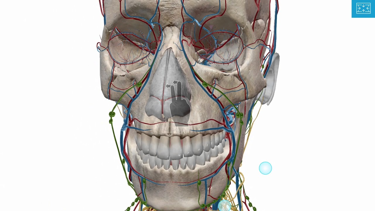 Zooming Dissecting And Rotating The 3d Model Human Anatomy Atlas