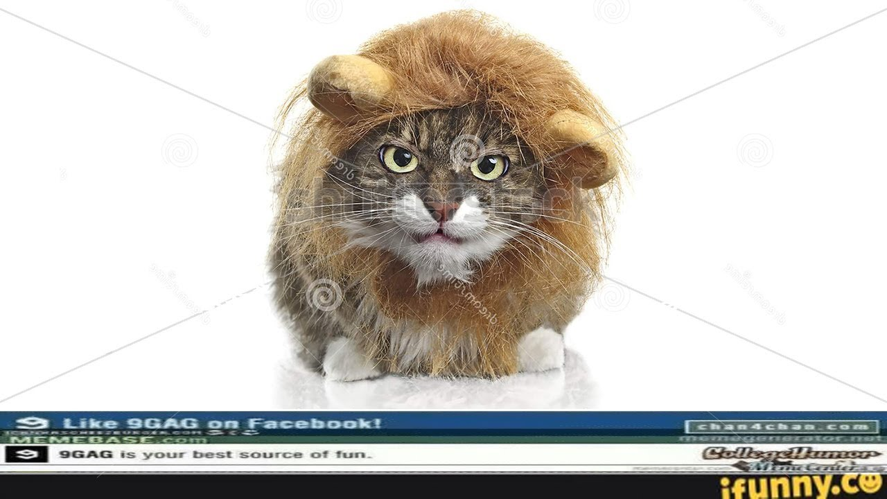 Live Action Lion King