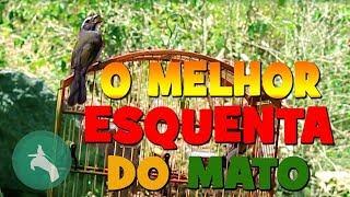 O MELHOR  VÍDEO ESQUENTA TRINCA FERRO DIRETO DO MATO!!!FULL HD
