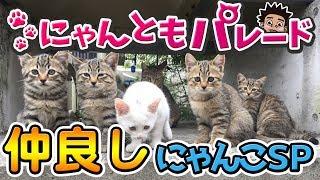 【猫動画】仲良しにゃんこスペシャル〜にゃんともパレード〜