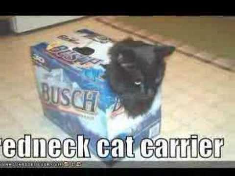 Stupid Cat Tricks