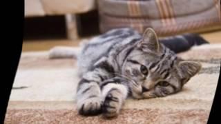 Как вывести кошачий запах с ковра
