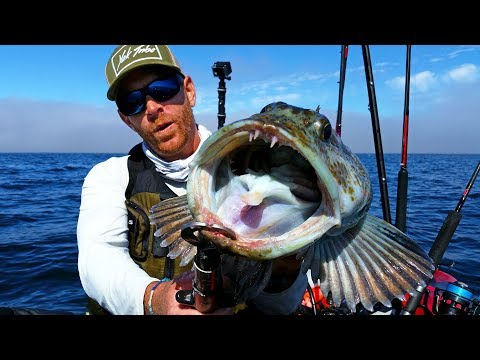 Kayak Fishing For Lingcod In Great White Country | #FieldTrips West Coast
