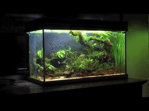Ich bin ein aquarium nerd youtube for Aquarium modern einrichten