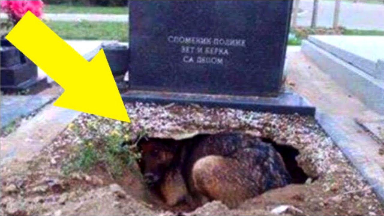 Alle dachten dieser Hund bewacht das Grab seines Herrchens, dann lüftete eine Frau das Geheimnis