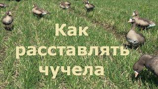 Охота на гуся - Расстановка чучел/Как расставлять чучела/ПроГусь схема!