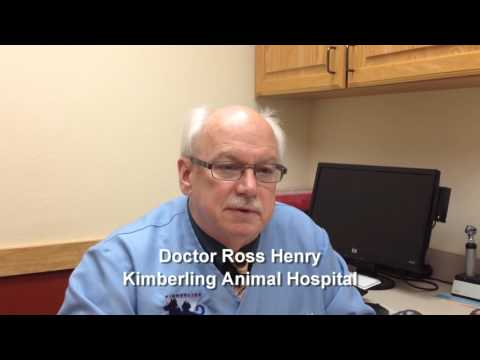 Pet Tips   Chronic Renal Disease Part One